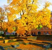 Дерево с золотыми листьями в осени в городе Аугсбурга стоковое фото