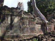 Дерево с каменным зданием Стоковые Изображения