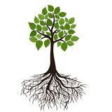 Дерево с корнями иллюстрация штока
