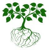 Дерево с корнями мозга бесплатная иллюстрация