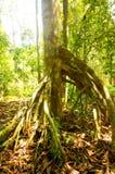 Дерево с корнями подстенка Стоковое Изображение