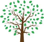 Дерево с листьями Стоковое Изображение RF