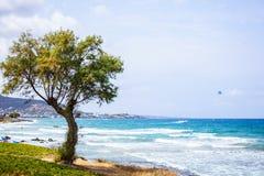 Дерево с небом в backgound Стоковые Фотографии RF