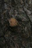 Дерево Сложенные узлы Стоковое Изображение