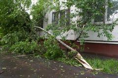 Дерево сломанное ураганом и домом в Москве в Москве Стоковое Фото