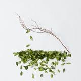 Дерево с падать листьев Стоковые Изображения RF
