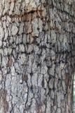 Дерево с повреждением расшивы от сверлильных насекомых стоковые фото