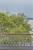 Дерево с птицами на реке Guayas в Гуаякиле эквадоре Стоковая Фотография
