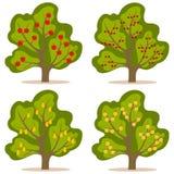 Дерево с плодоовощ иллюстрация штока