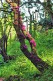 Дерево с розовыми цветками Стоковая Фотография RF