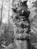 Дерево с сериями детали в своей расшиве стоковые изображения