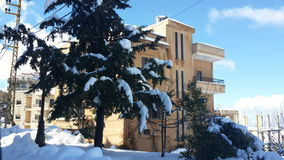 Дерево с снегом Стоковое Изображение