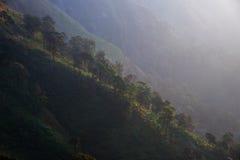 Дерево с солнечным светом Стоковые Изображения