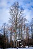 Дерево с стойкой дерева в зиме Стоковое Фото