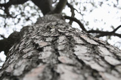 Дерево с треснутой расшивой Стоковые Фотографии RF