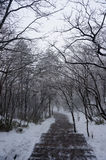 Дерево с туманом и деревом снега Стоковые Фото