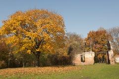 Дерево с цветастыми листьями Стоковое Изображение RF