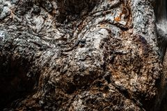 Дерево, текстура, деталь, предпосылка, кожа, конец вверх по старой коже дерева стоковое изображение