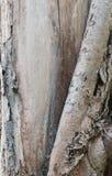 Дерево текстуры стоковые фотографии rf