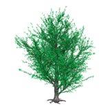 дерево тополя перевода 3D на белизне стоковая фотография rf