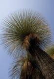 Дерево травы Стоковая Фотография RF