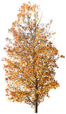 Дерево, дуб, заводы, природа, зеленый цвет, лето, густолиственное, растительность Стоковые Фото