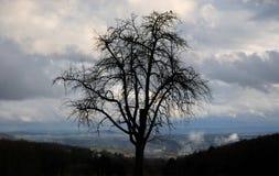 Дерево уединения на холме стоковые изображения