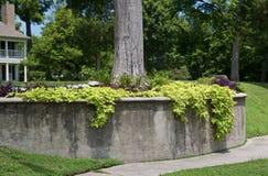Дерево украшенное с листвой стоковая фотография rf