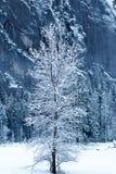 Дерево укрыванное с снегом Стоковое Фото