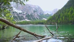 Дерево упаденное в озеро акции видеоматериалы