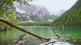 Дерево упаденное в озеро сток-видео