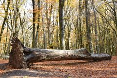 Дерево упаденное в парк осени Стоковое Фото