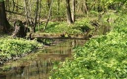 Дерево упаденное через ручеек Стоковое Фото
