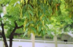 Дерево утехи Стоковое Изображение