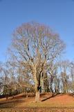 Дерево Финляндия Стоковые Фотографии RF