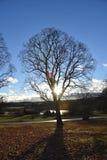 Дерево Финляндия Стоковые Изображения RF