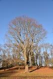 Дерево Финляндия Стоковое Изображение