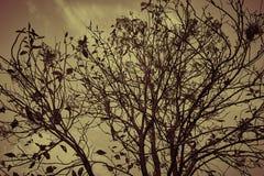 Дерево хмурое стоковые фотографии rf