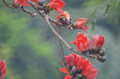 Дерево хлопка Стоковые Фотографии RF