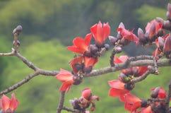 Дерево хлопка Стоковое фото RF