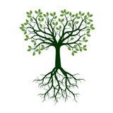 Дерево цвета с корнями также вектор иллюстрации притяжки corel иллюстрация вектора