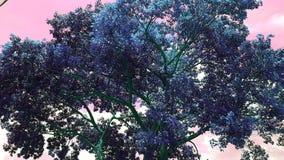 Дерево цвета Стоковое фото RF