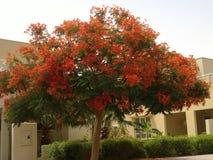 Дерево цветка с вполне цветка стоковая фотография