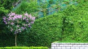 Дерево цветка форменное с стеной травы Стоковые Фотографии RF