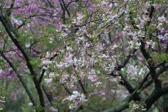 Дерево цветка Стоковая Фотография RF