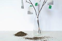 Дерево чая Стоковая Фотография