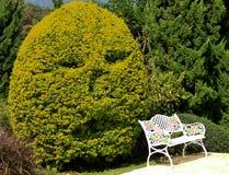 Дерево человеческого лица Стоковая Фотография