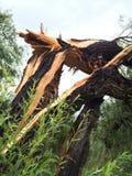 Дерево шторма сломанное повреждением Стоковое Изображение