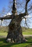 Дерево любит изверг стоковое фото