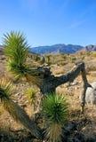 Дерево юкки в горах Стоковое Фото